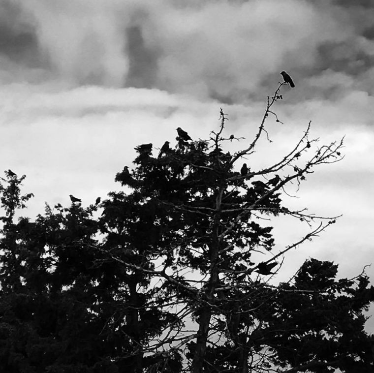 Birds were placed as ornaments on tree, Avlonari, Evia