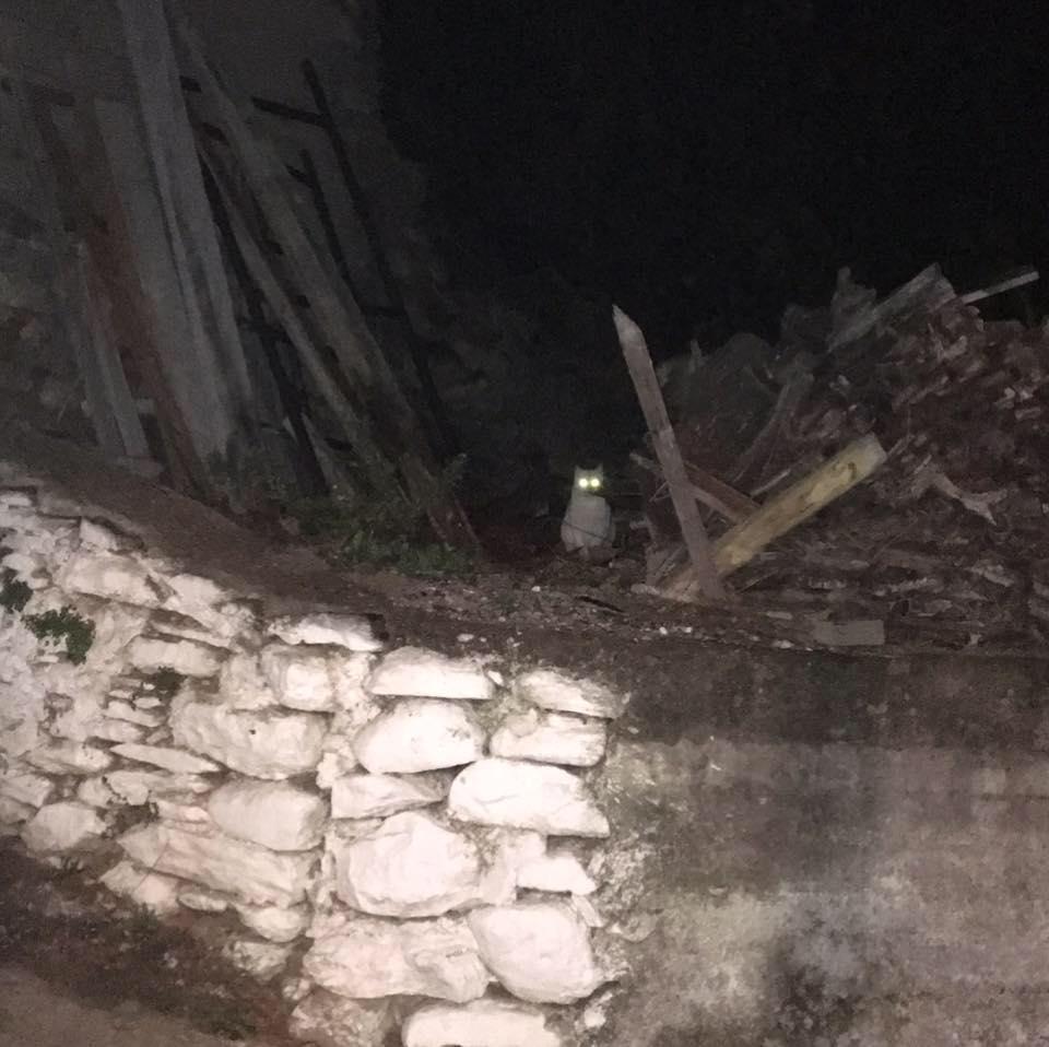 Night encounter with white supernatural cat, Avlonari, Evia, 6.1.17